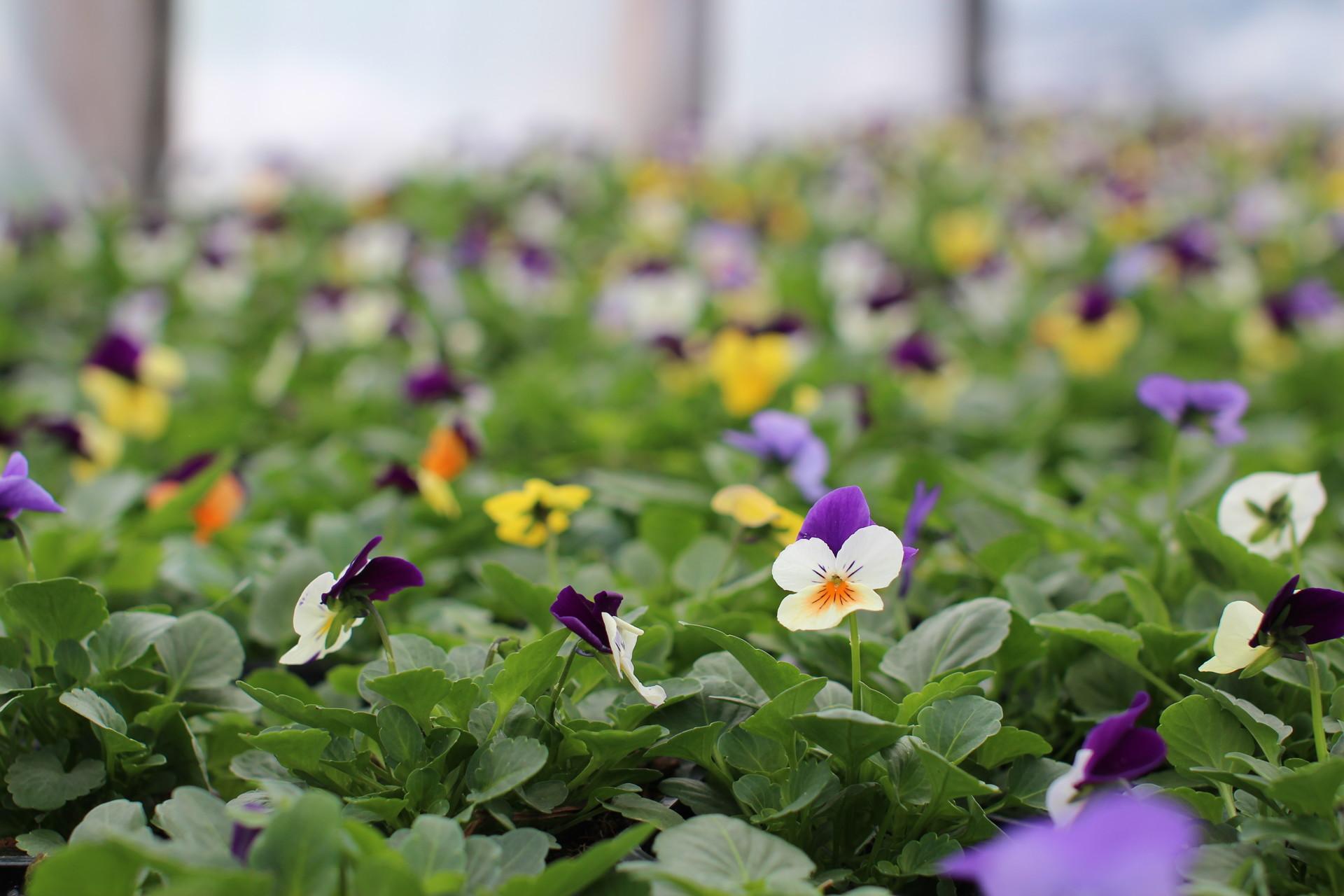 Купить рассаду в Санкт-Петербурге для сада и огорода 97